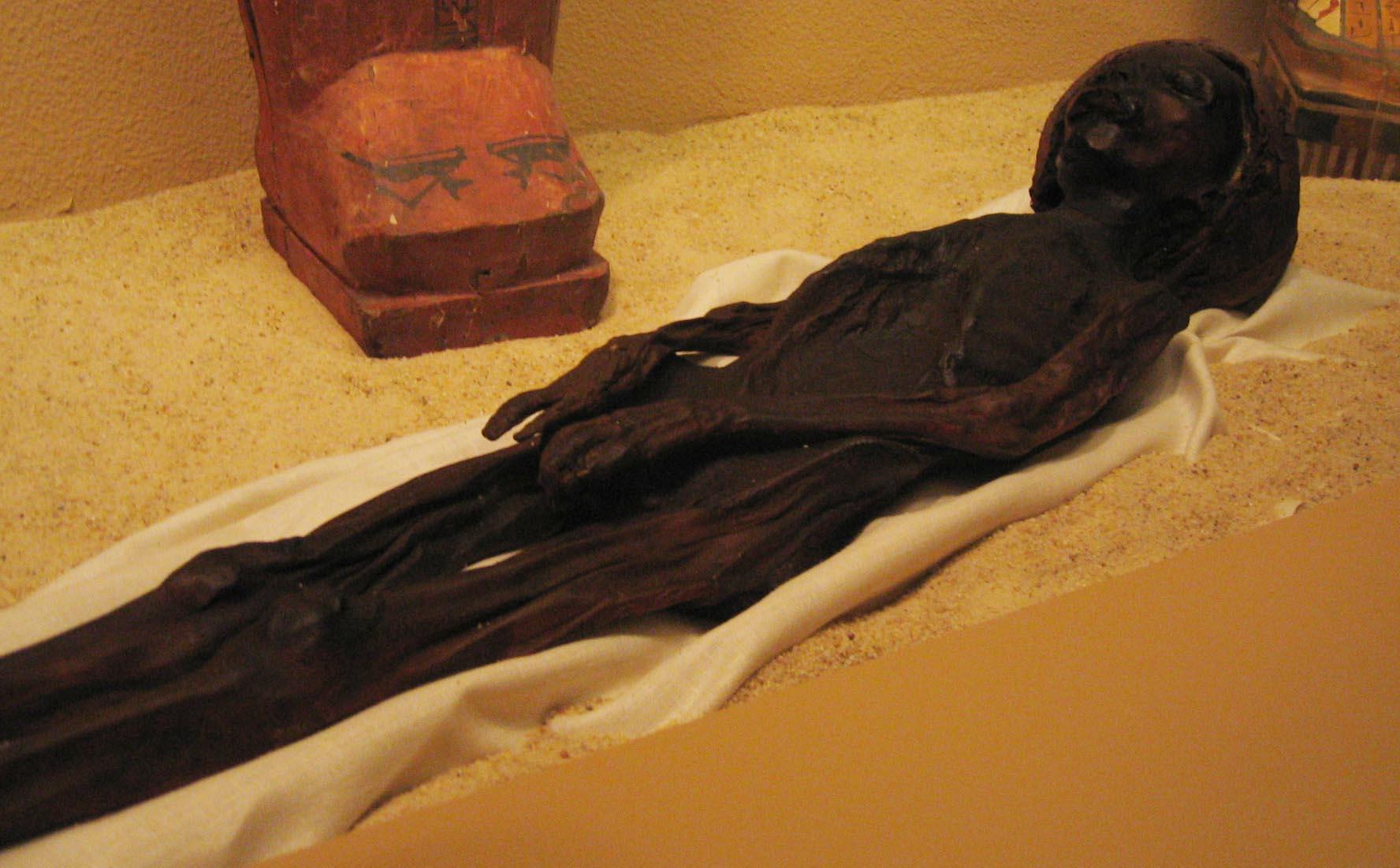 Mummy With Erect Penis