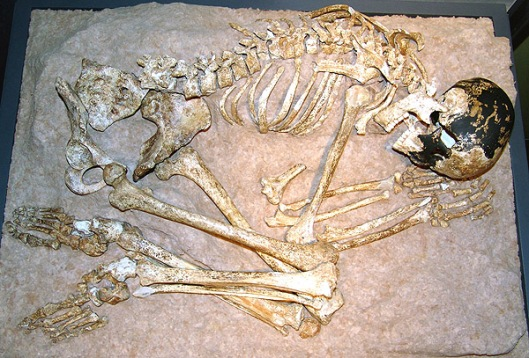 The skeleton of the Magdalenian Woman as displayed in the Lascaux exhibit.